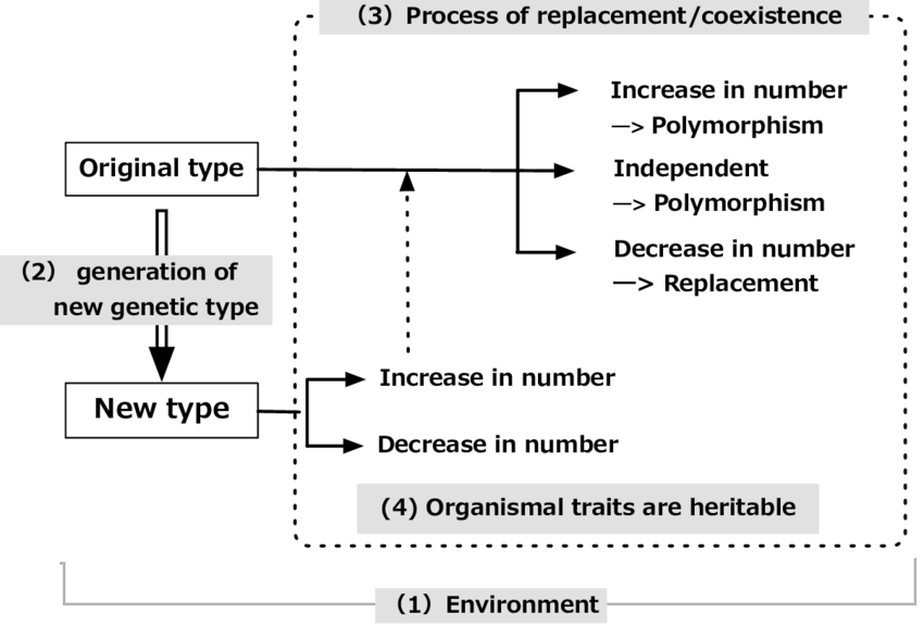 Evolution transparent natural selection. Four conditions or processes