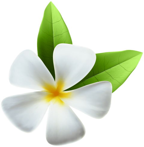 Exotic flower png. White free images toppng