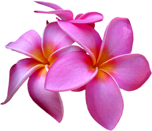 Exotic flower png. E c ecf