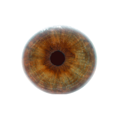 File wikimedia commons eyeballpng. Eyeball png clipart transparent download