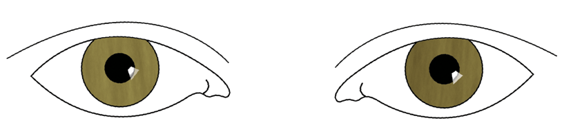 Drawing science eye. Guiding principles two eyed