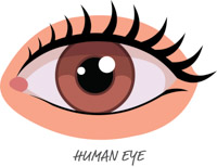 Eye clipart human eye. Search results for clip