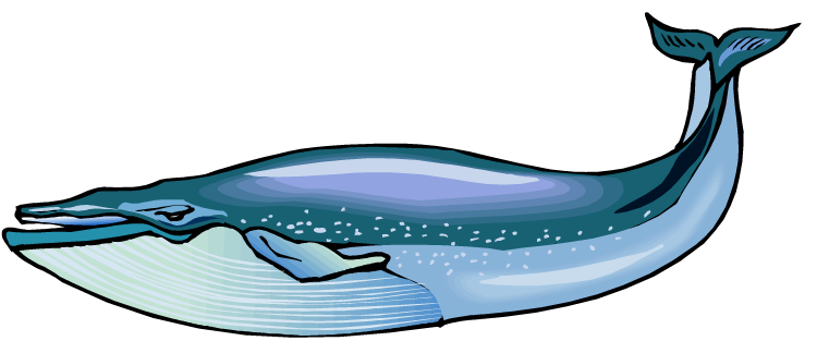 Eye clipart whale. Blue pictures panda free