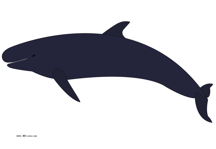 Eye clipart whale. Unusual killer clip art
