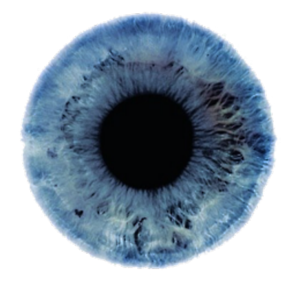 Eye iris png. Pupil transparent roblox pupiliris