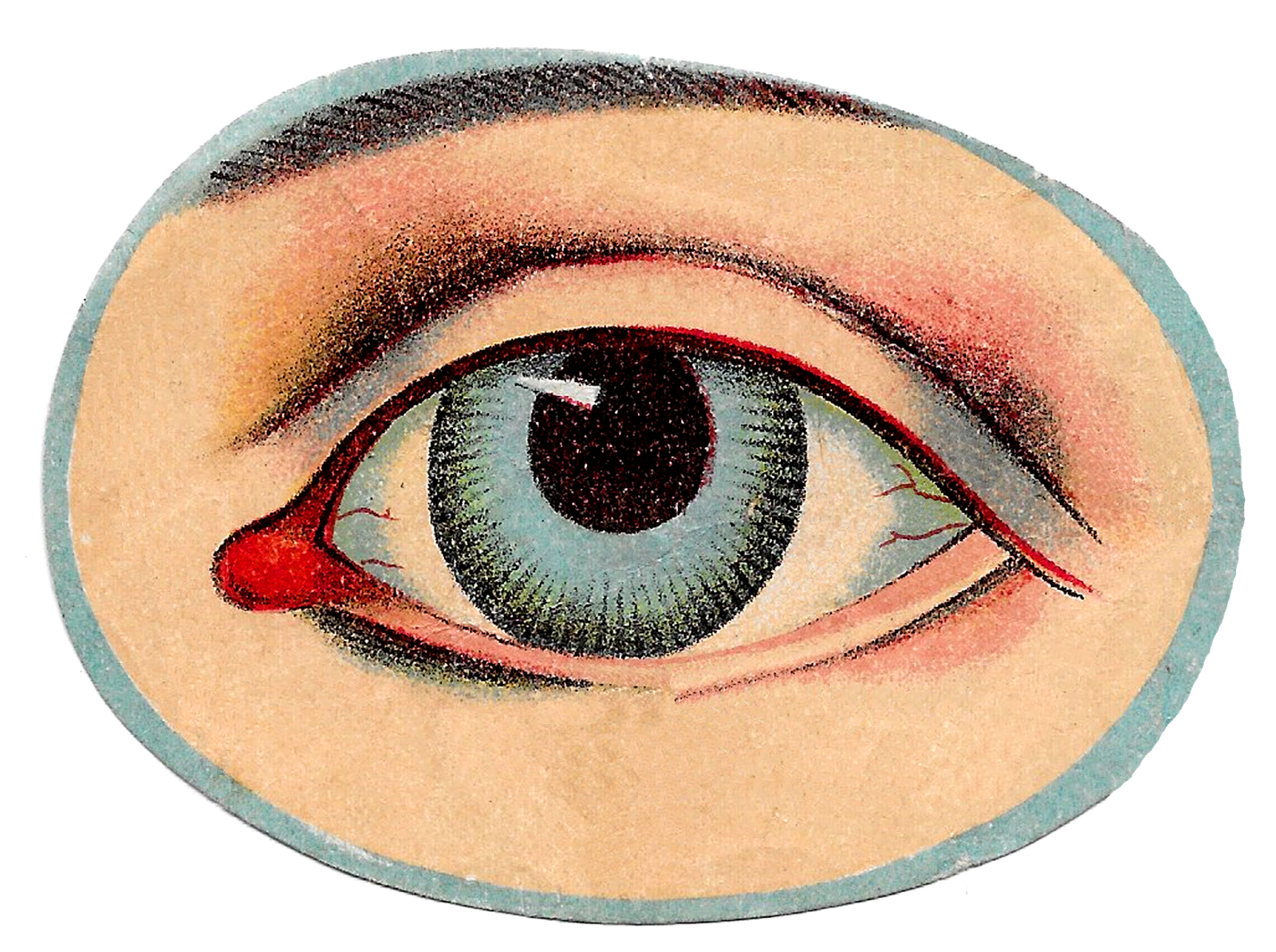 Vector eyeball vintage. Antique images free human