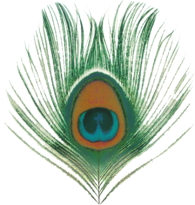 Eye png transparent. Download peacock feather free