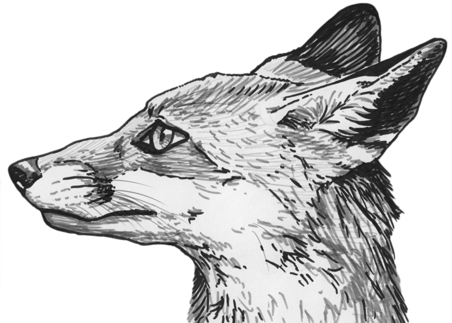 Image drawing sketch. Fox eyes png clipart
