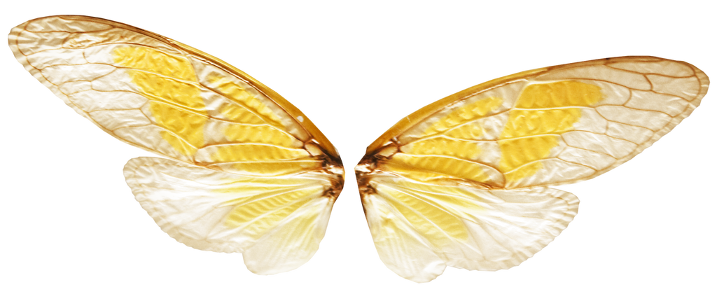 Fairy wing png. Wings with transparence by