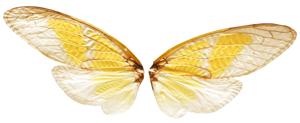 fairy wing png