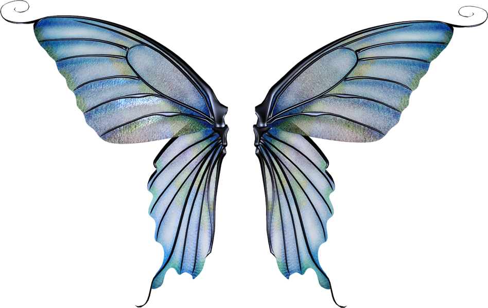 Fairy wing png. Fantasy wings psd official