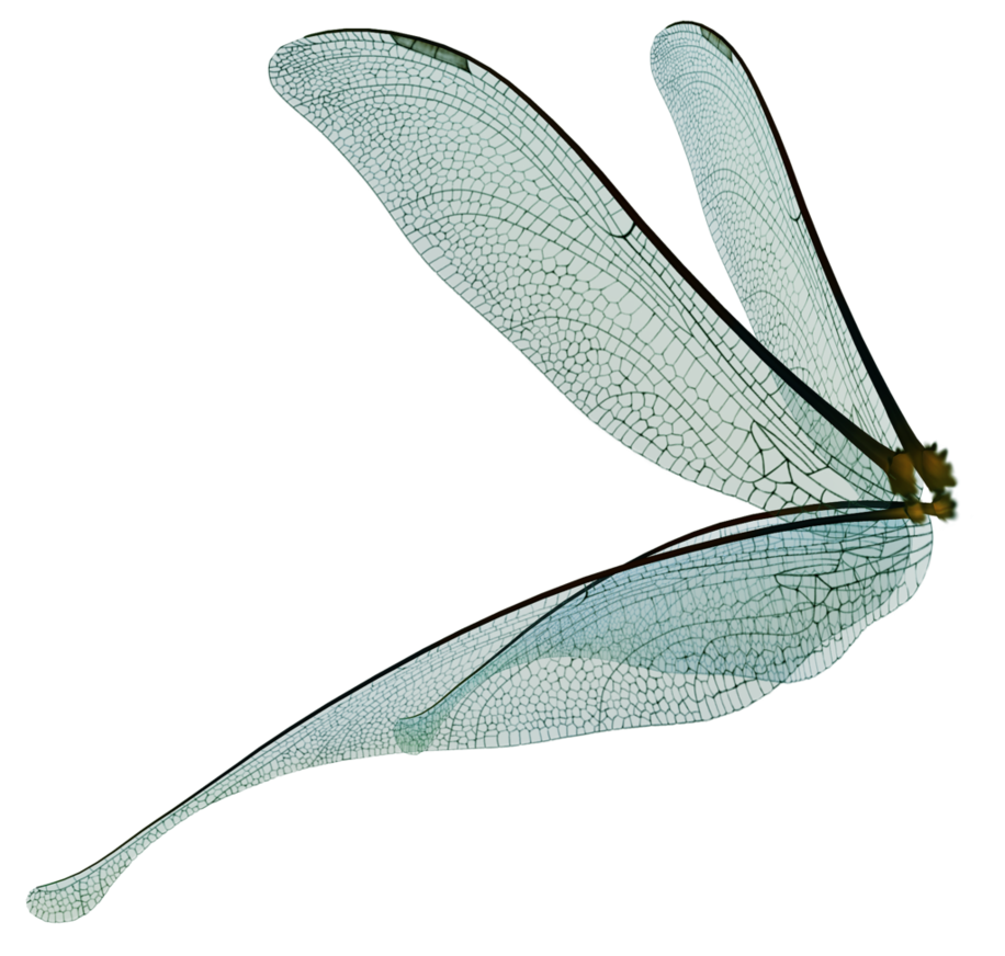 Fairy wings png. Unrestricted dragonfly render by