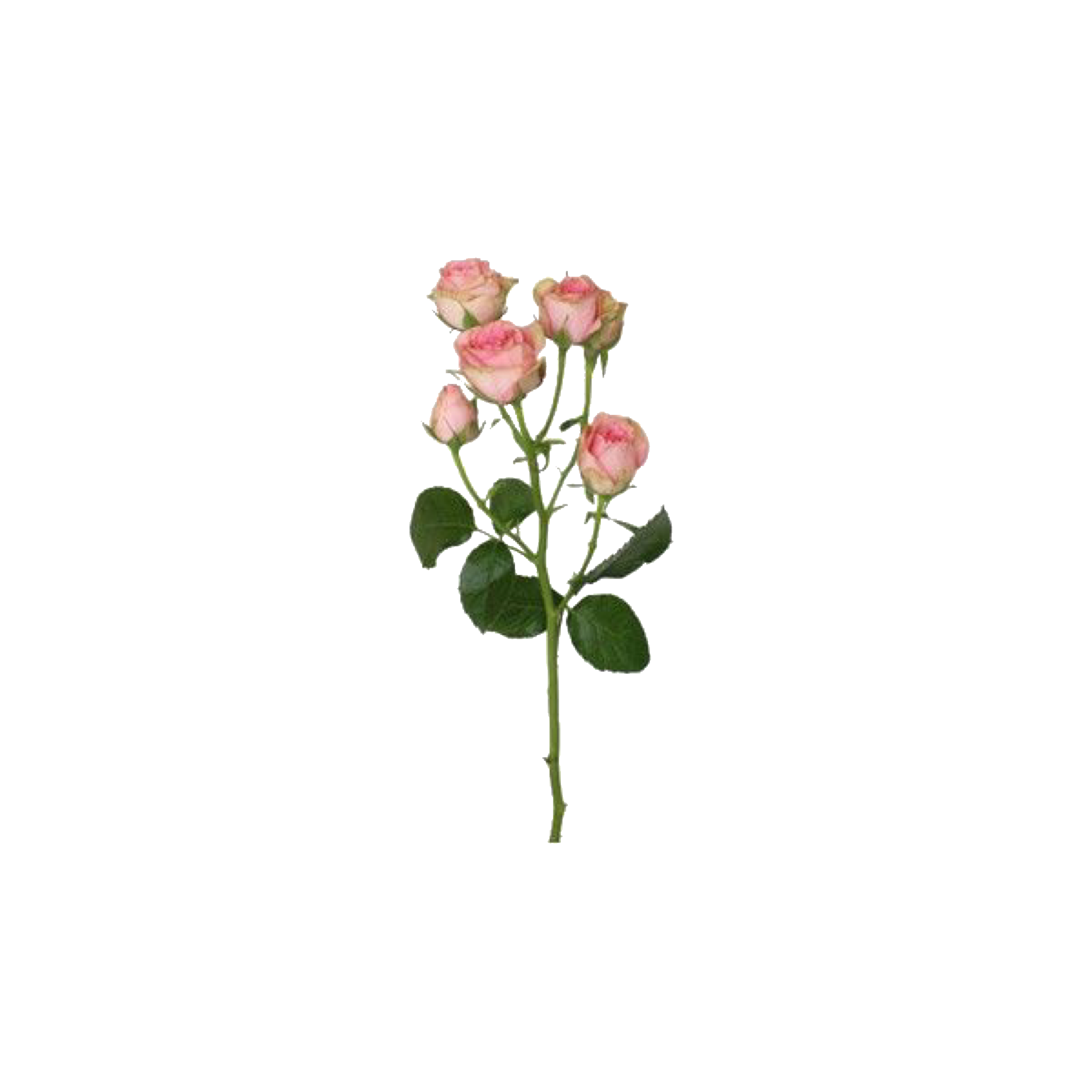 Fake drawing flower. Pin by wickedviv on