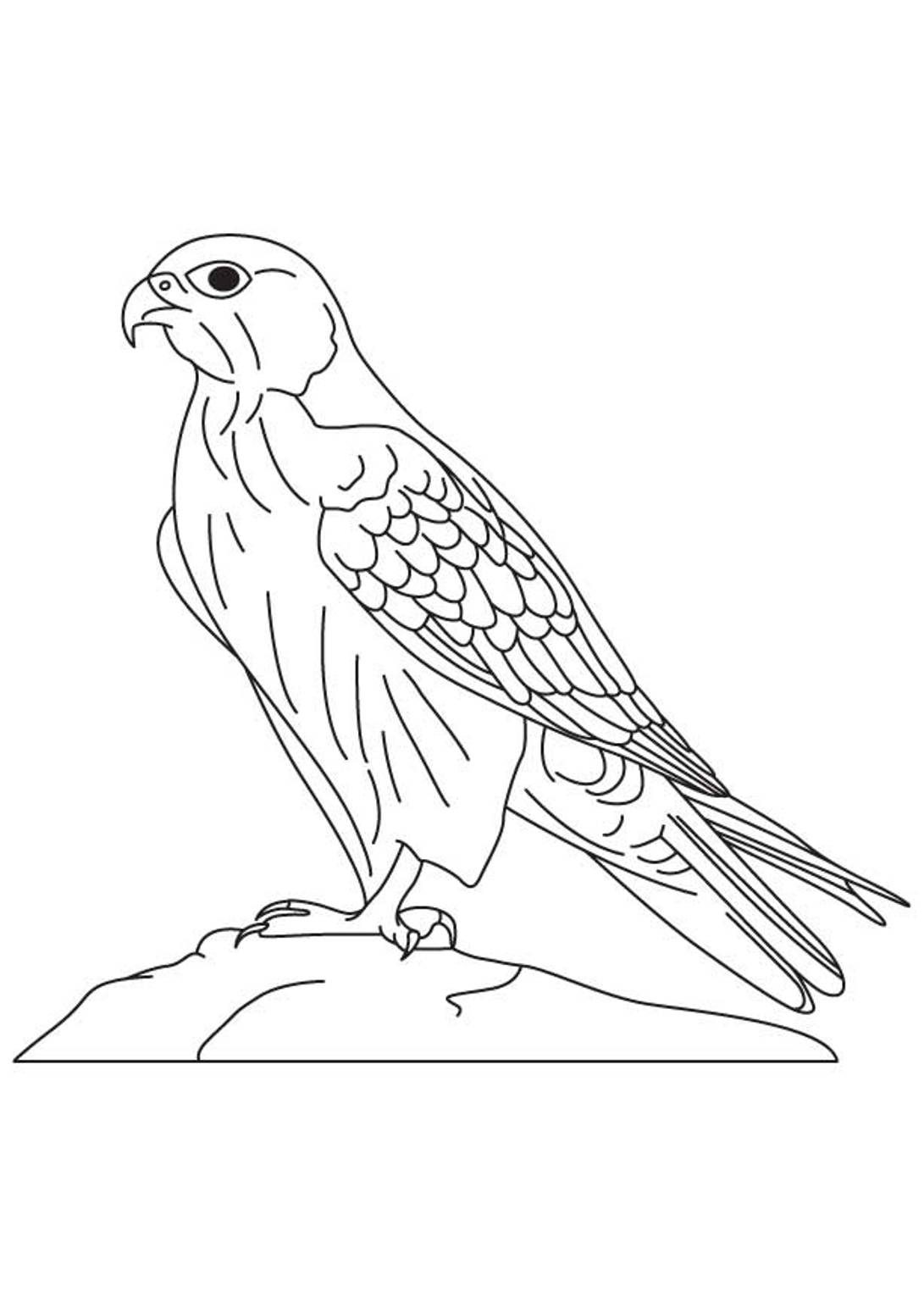 Falcon clipart coloring page. Peregrine pencil and in