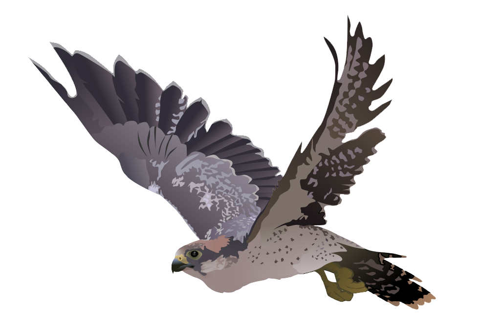 raven clipart outstretched wing