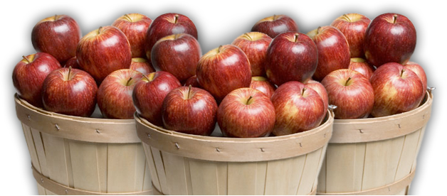Fall apples png. Altamont orchards a family