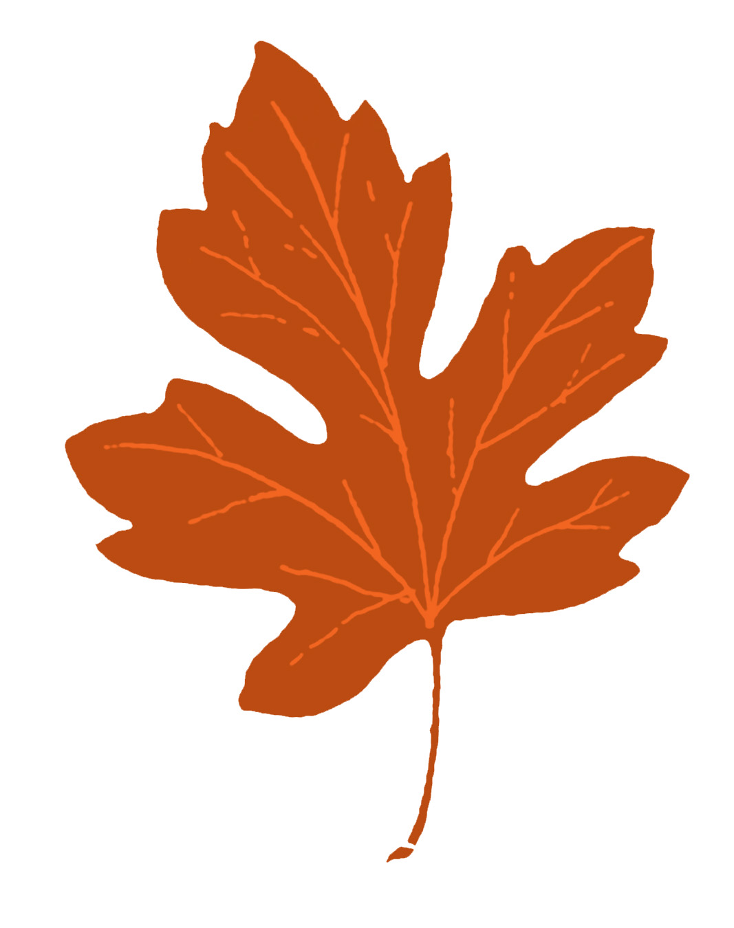 Fall clipart. Vintage clip art maple