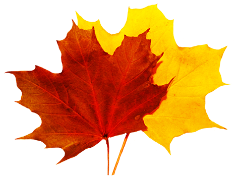 fall leaves clipart png