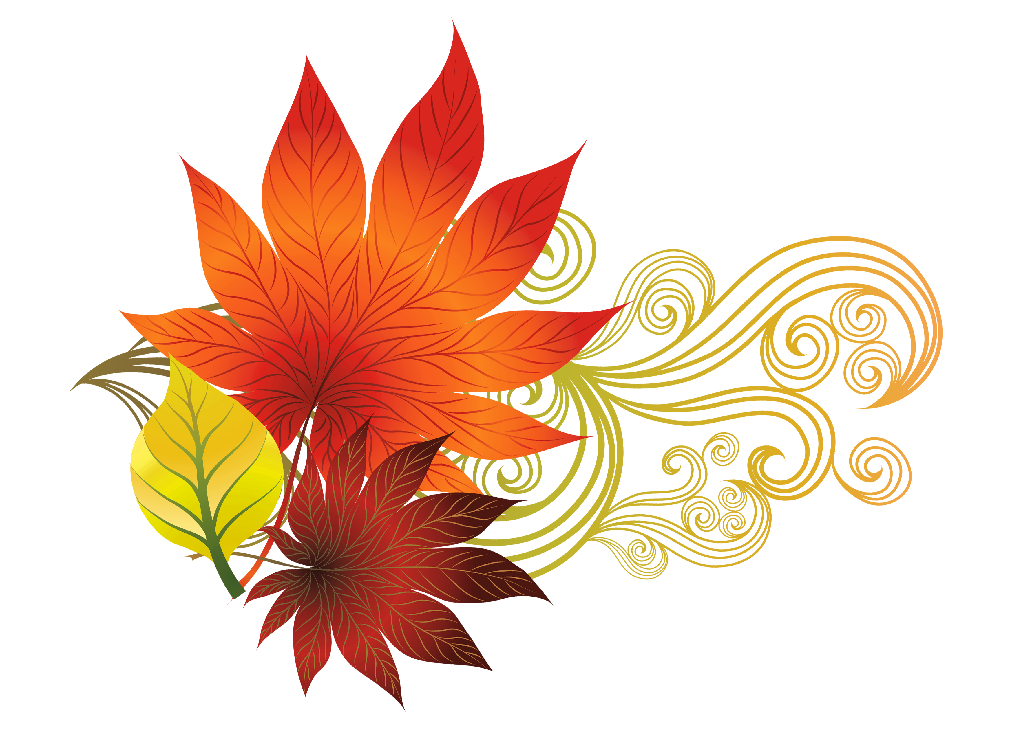 Falling flower png. Fall leaves decoration clipart