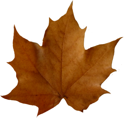 Fall leaf clip art png. Leaves beautiful autumn clipart