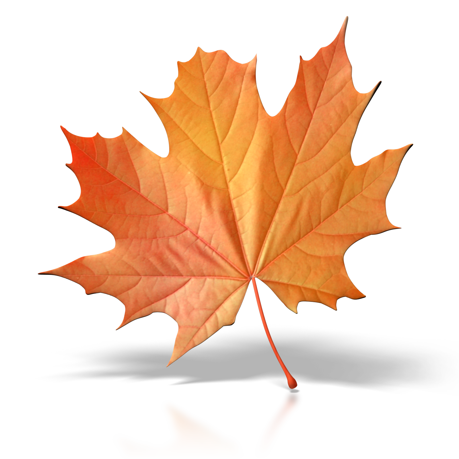 Fall leaf .png. Leaves it s the