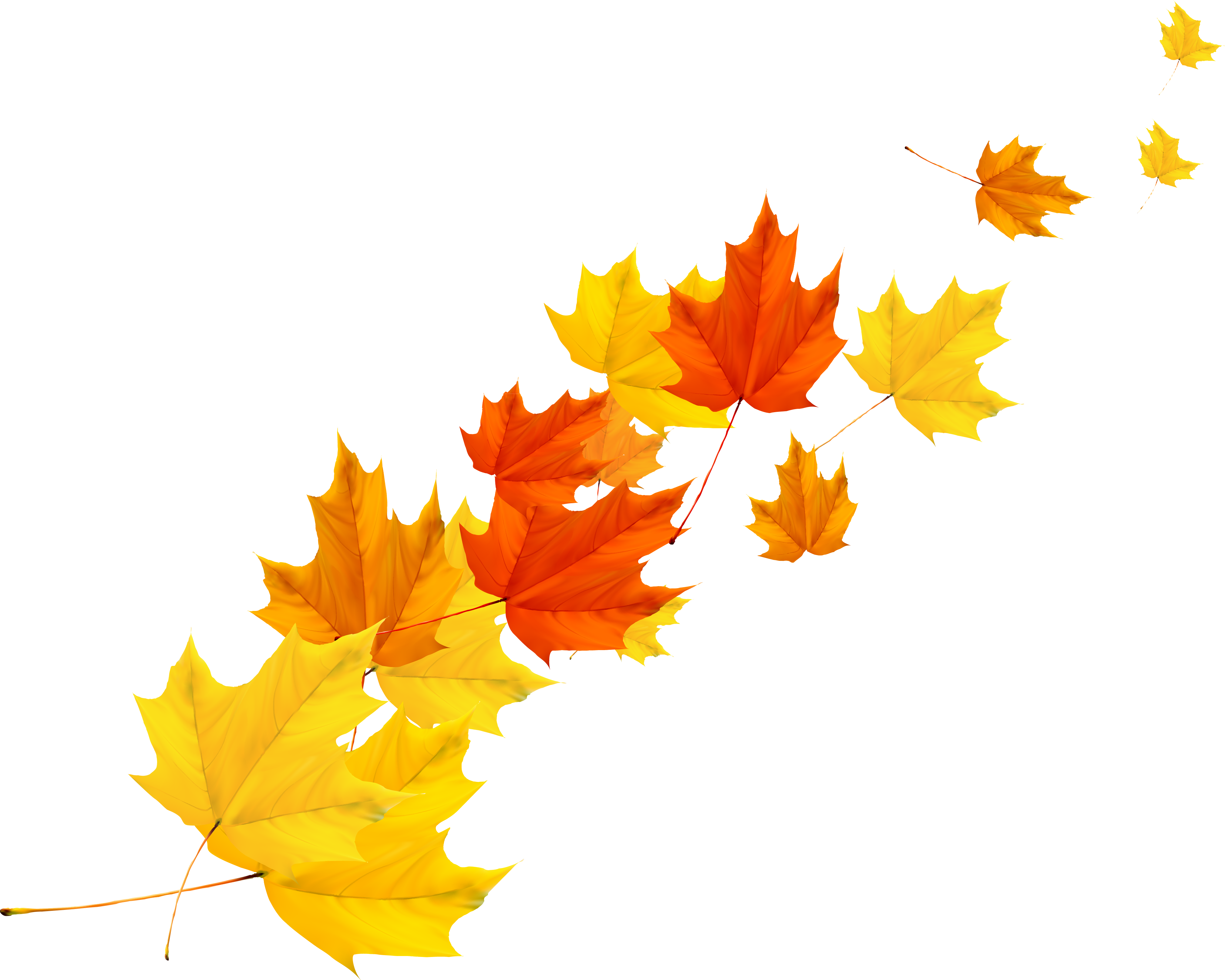 Leaf autumn transprent png. Maple vector image library download