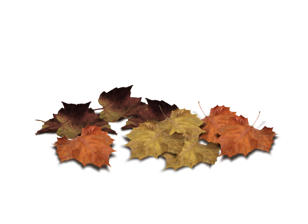 Fall leaf png. Leaves by moonglowlilly on