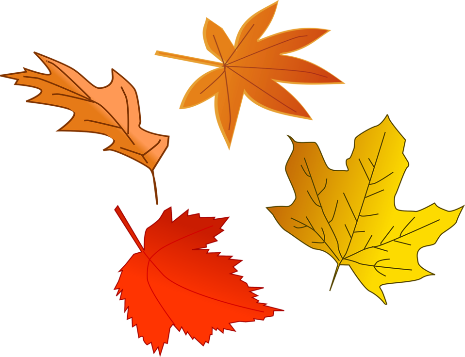 Fall leaves corner border png. Leaf autumn free stock