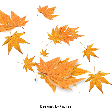 Maple vector. Fall leaves png images