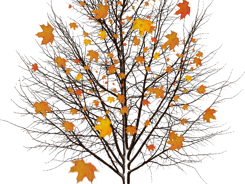 Fall leaves falling from a tree png real trees. Autumn with isolated object