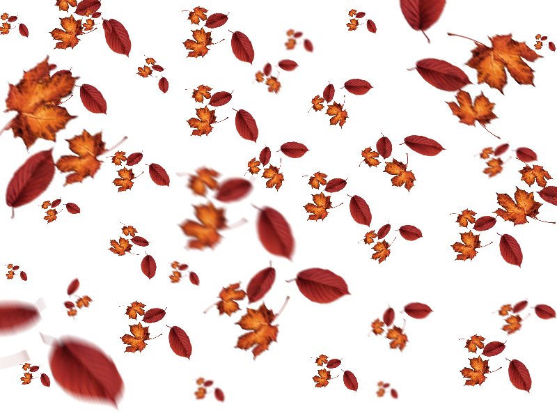 Leaves overlay png. Fall for photoshop nature