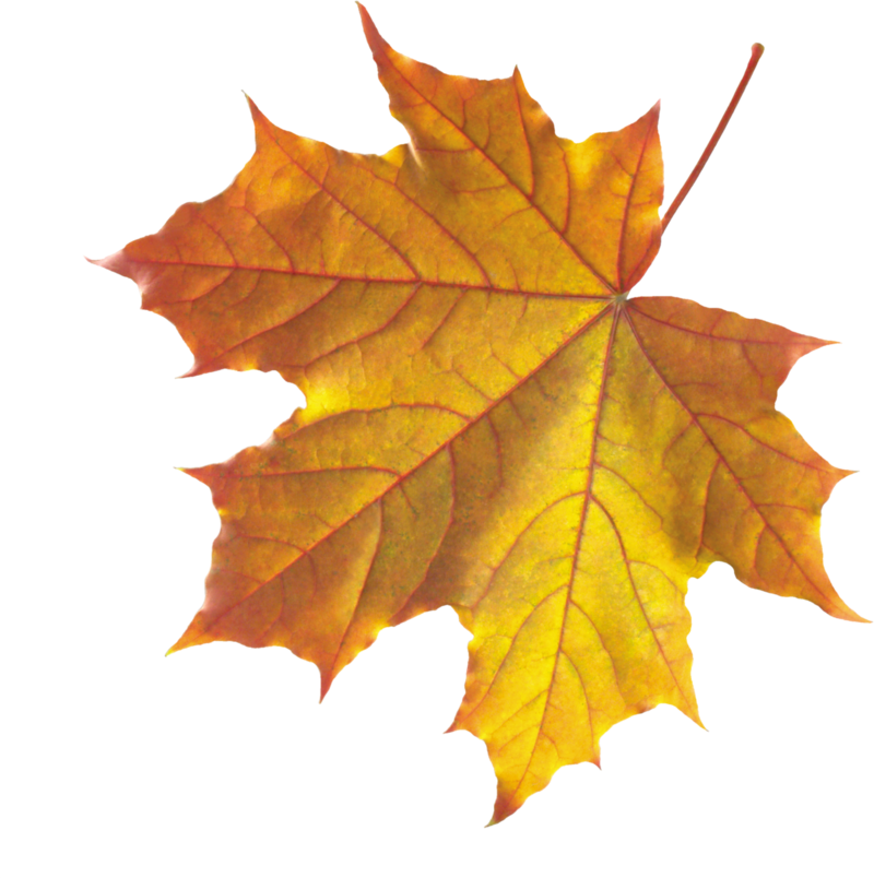 Fall leaves .png. Autumn png images transparent