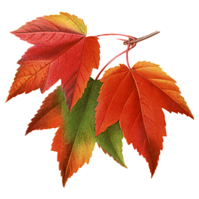 Fall leaves .png. Autumn pictures collage png