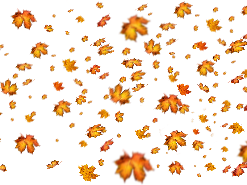 Photoshop overlay png. Fall leaves for nature