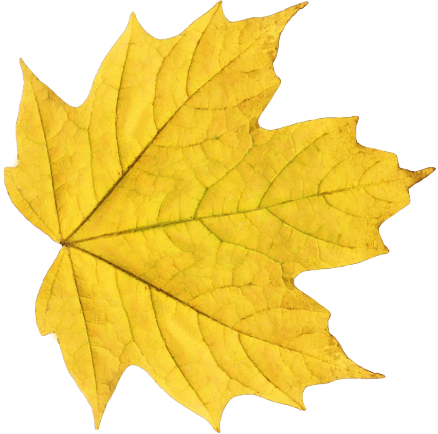 Fall leaves png. Yellow leaf free icons
