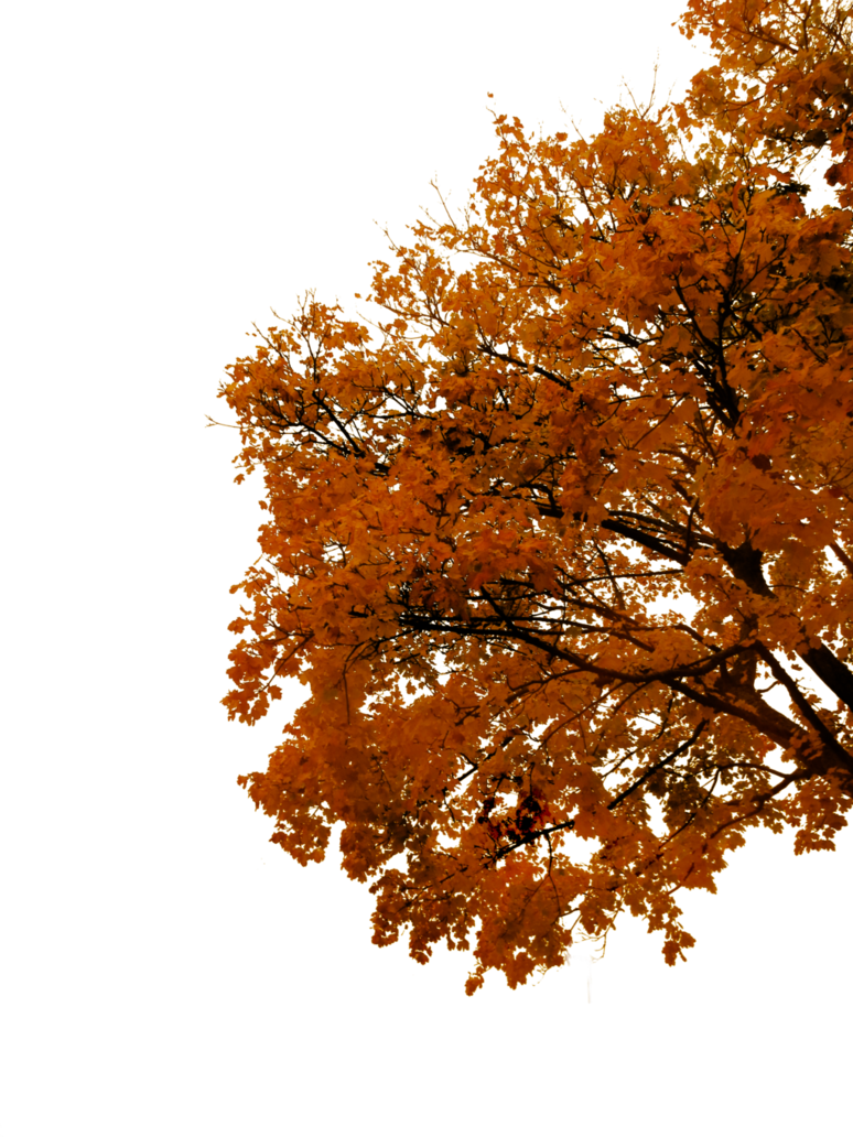 Autumn tree png. Cutout by tigers