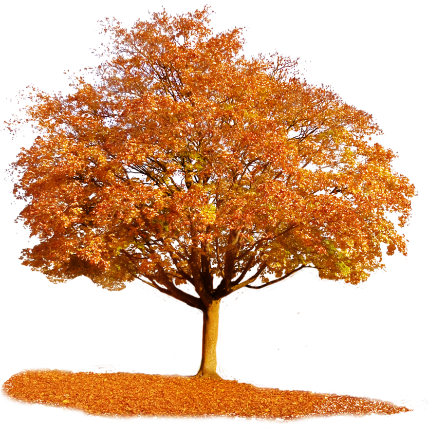 Autumn tree png. By tigers stock
