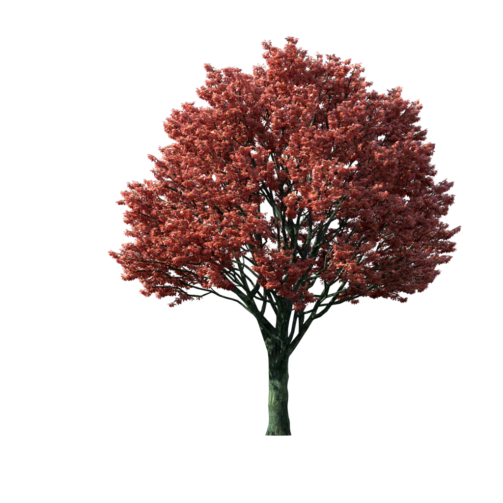 Red tree png. Clipart flaming autumn maple