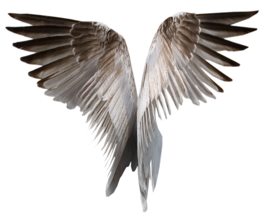 Fallen angel wing png. Angels wings drawing at