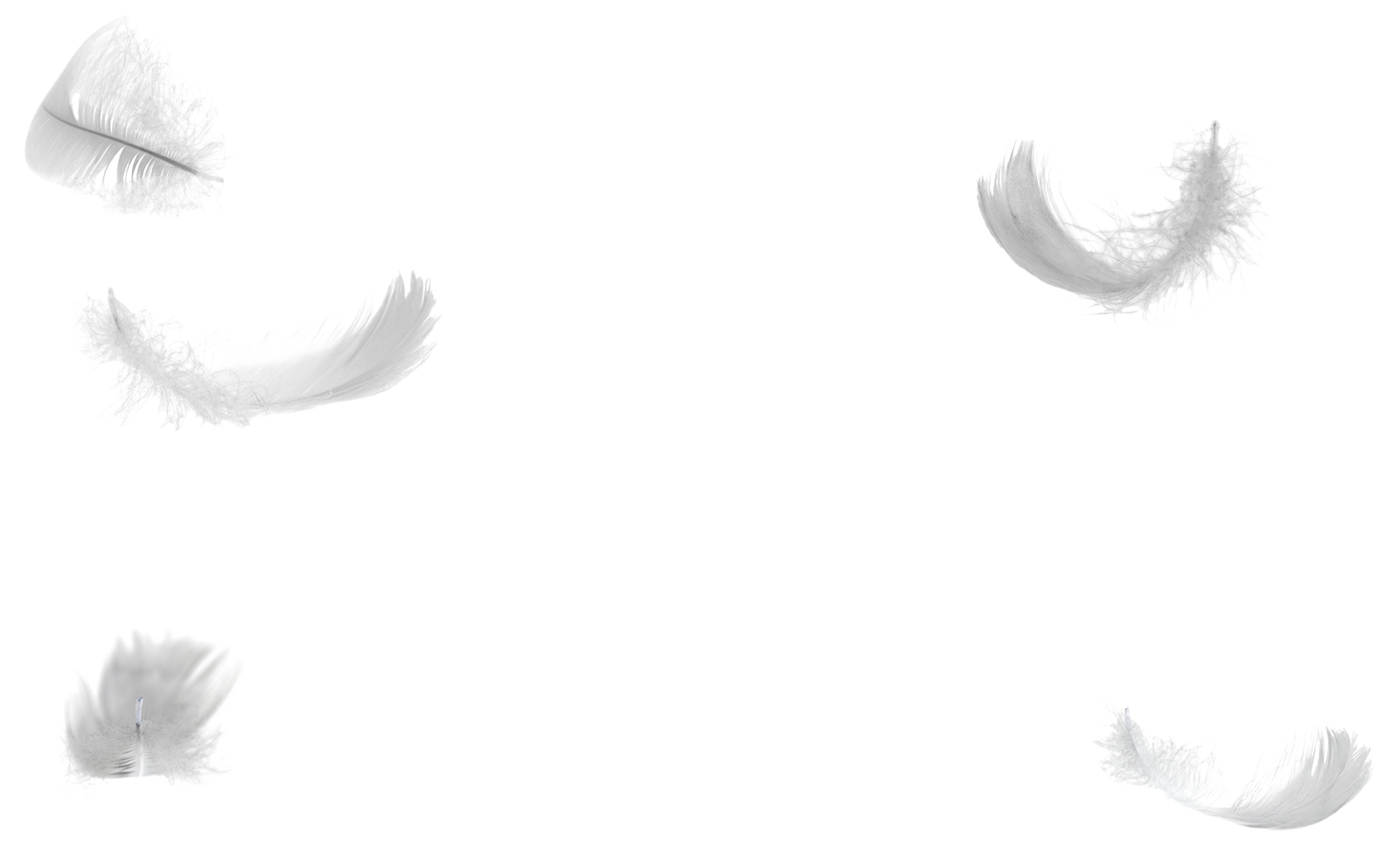 Falling angel feathers png. White feather wing down