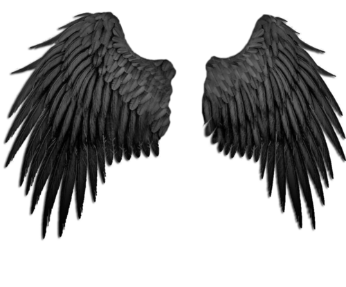 Falling angel feathers png. Image about in nifty