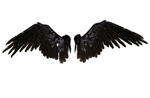 Falling angel feathers png. Transparent wings tumblr wizardsmisery