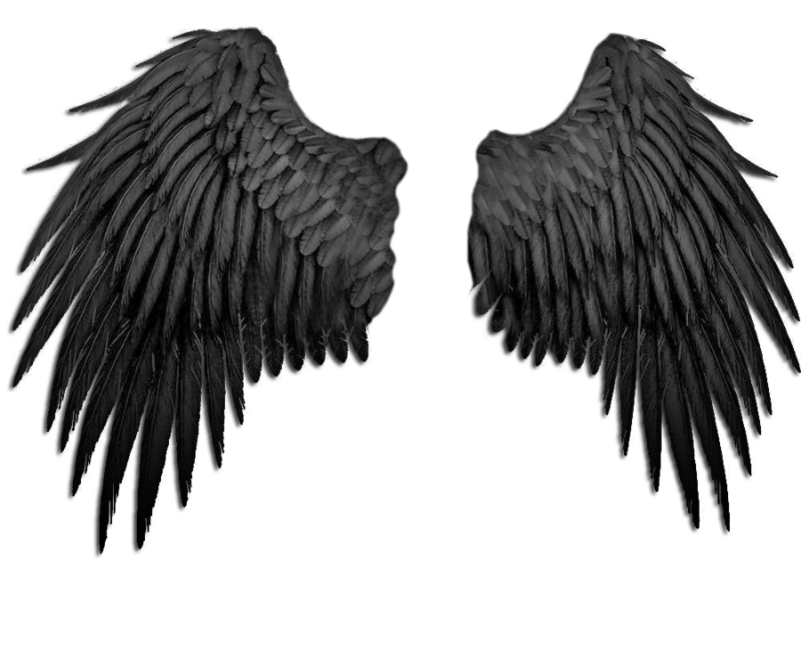 Falling angel feathers png. Black wings by marioara