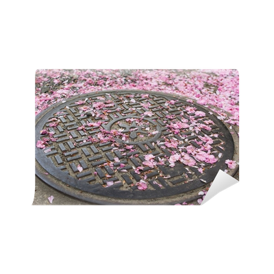 Falling cherry blossom png. Petals on the sewer