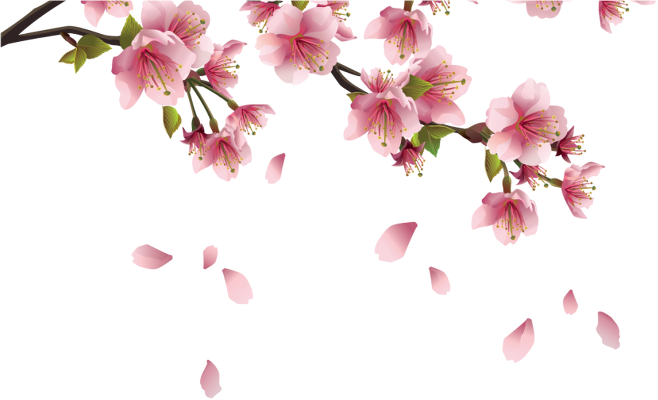 Cherry blossom petals png. Download hd beautiful pink