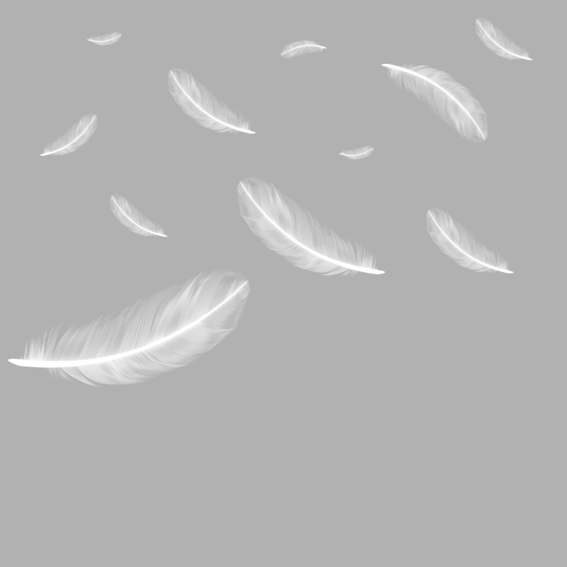 Falling feathers png. Floating feather image and