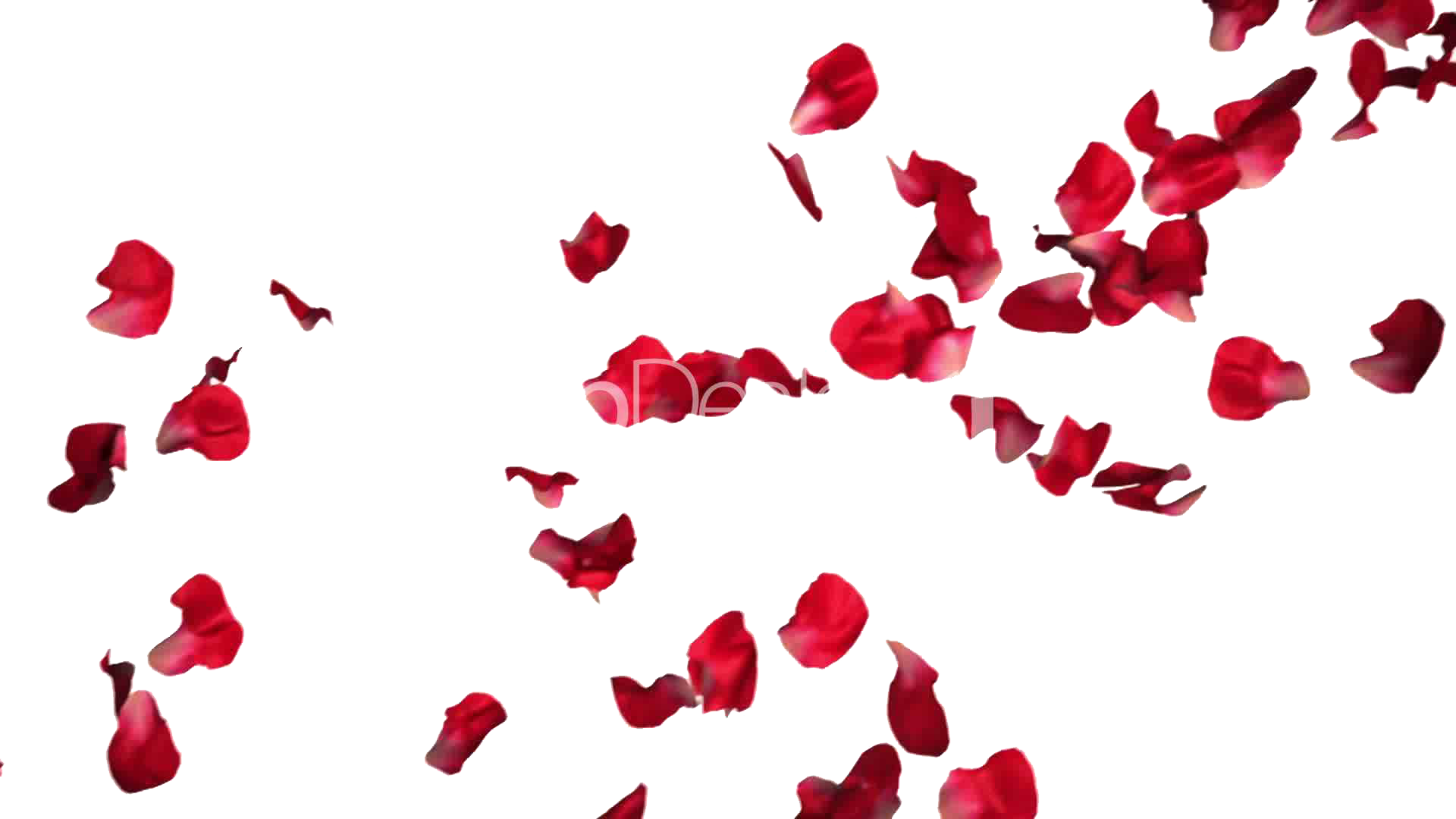 Flower petal png. Download rose petals hq