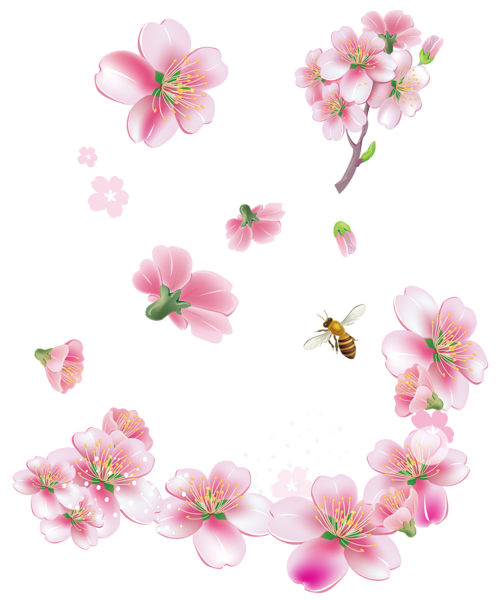 Falling flowers png. Spring pink trees clipart