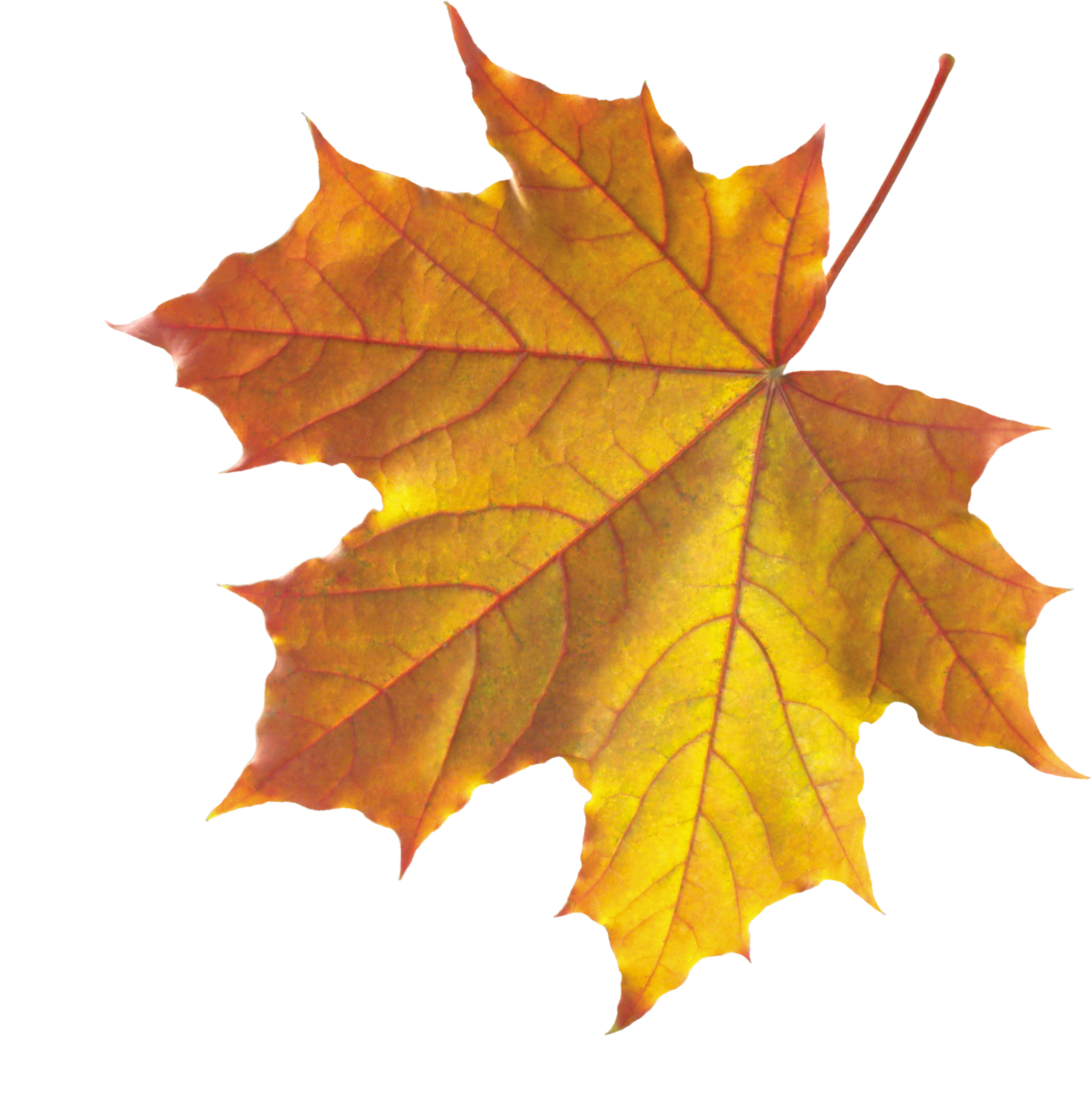 Falling leaf png. Autumn leaves images free