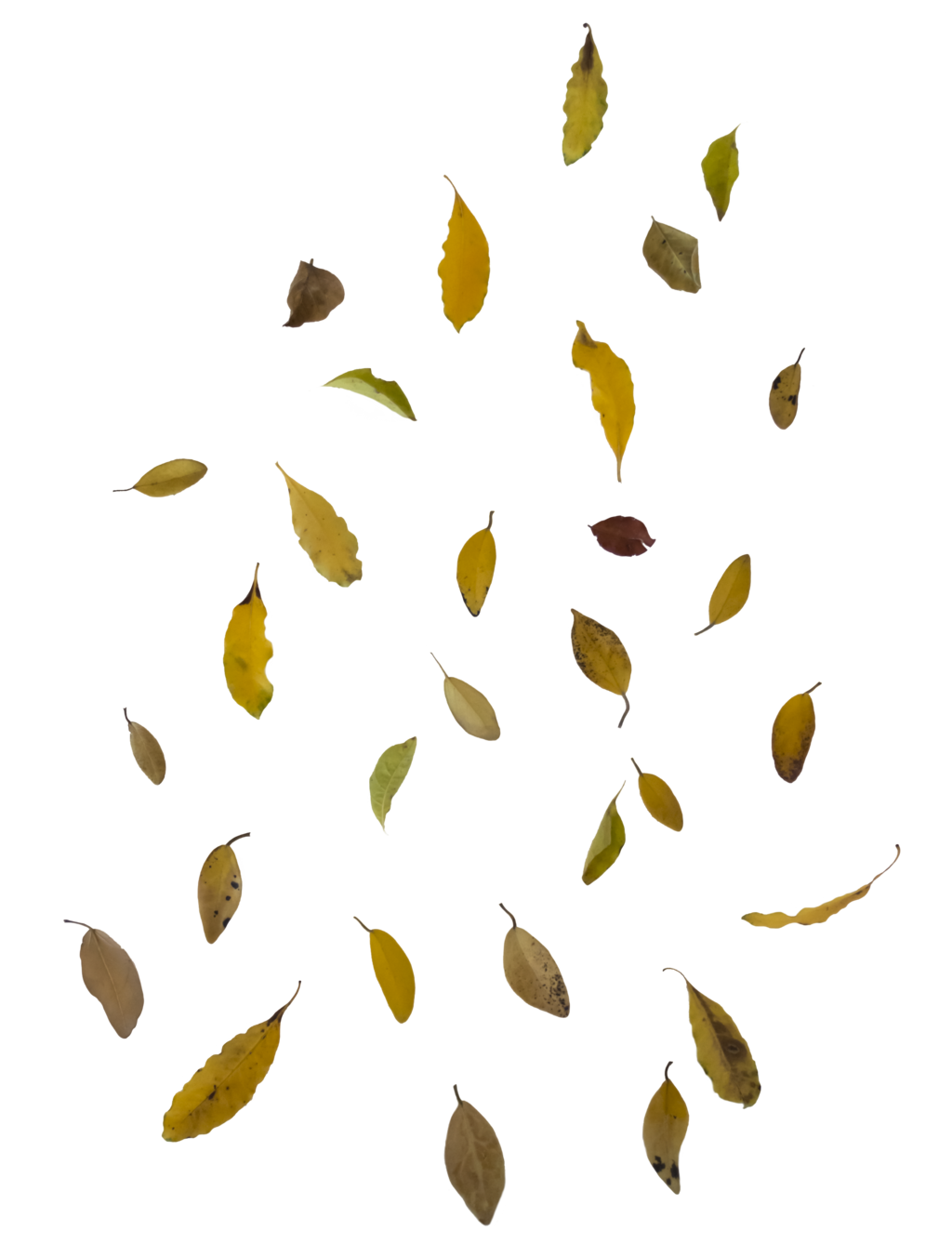 Falling leaves png. Image mart